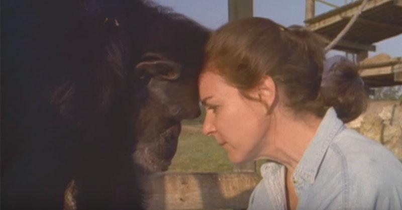 Linda-chimp-thumb.jpg