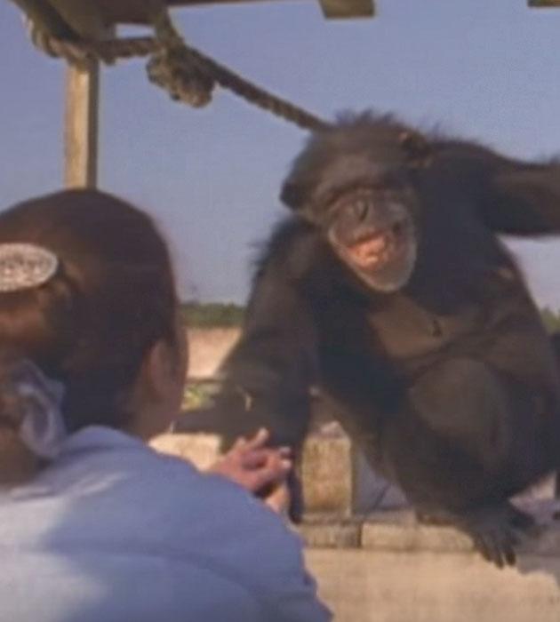 chimp-smile.jpg