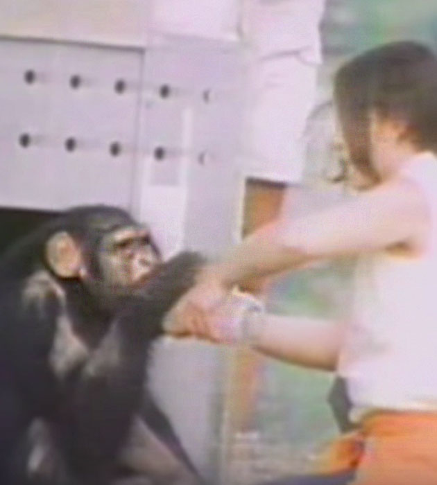 chimp-bottle.jpg