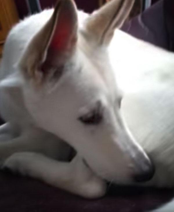 cute-dog-smells-fart.jpg