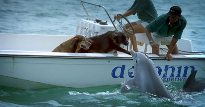 cute-dolphin-kisses-dog-THUMB.jpg