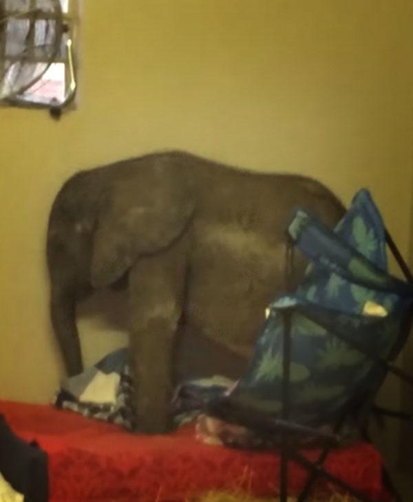 cute-baby-elephant-on-cushion.jpg