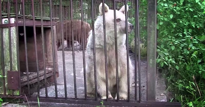 cute-captivity-bear-THUMB.jpg