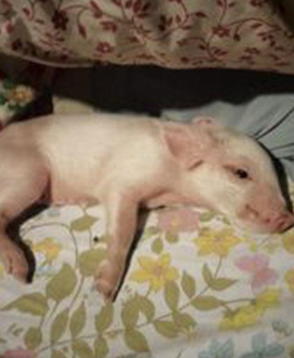 cute-pig.jpg