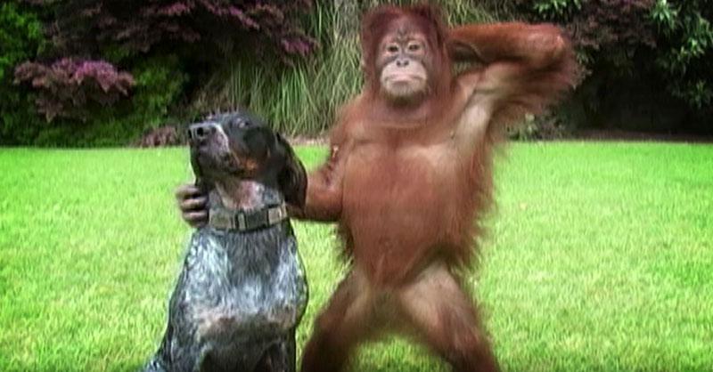 cute-animal-commercial-THUMB.jpg
