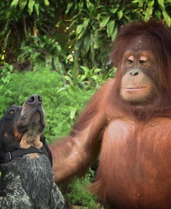 cute-dog-with-ape.jpg