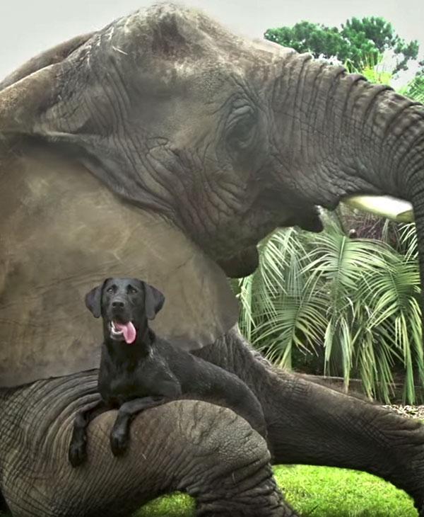 cute-dog-with-elephant.jpg