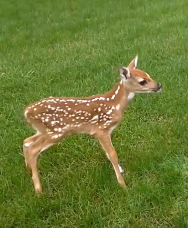 cute-animals-wild-rescue-deer-grass.jpg