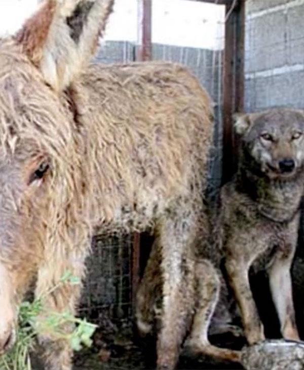 cute-donkey-wolf-happy.jpg
