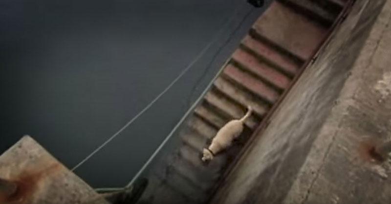 cute-dog-in-harbor-THUMB.jpg