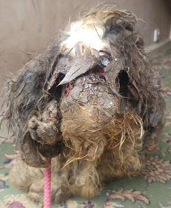 cute-dog-rescued-abuse.jpg