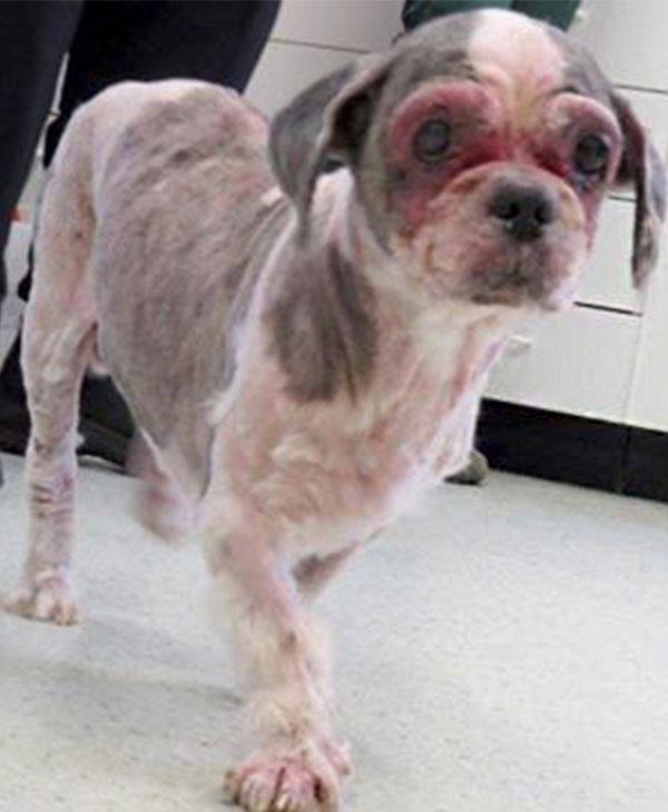 cute-rescued-dog.jpg