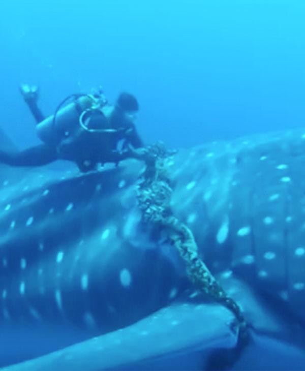 animal-ocean-water-diver-rescue-rope.jpg