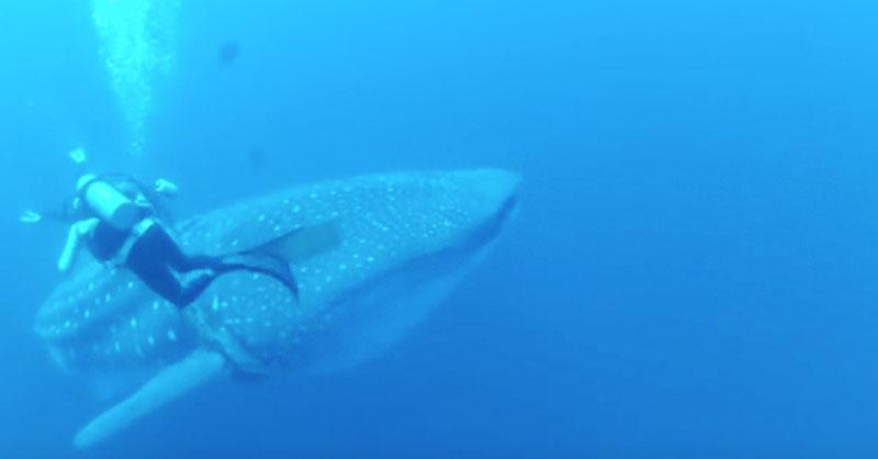 animal-ocean-water-diver-rescue-THUMB.jpg