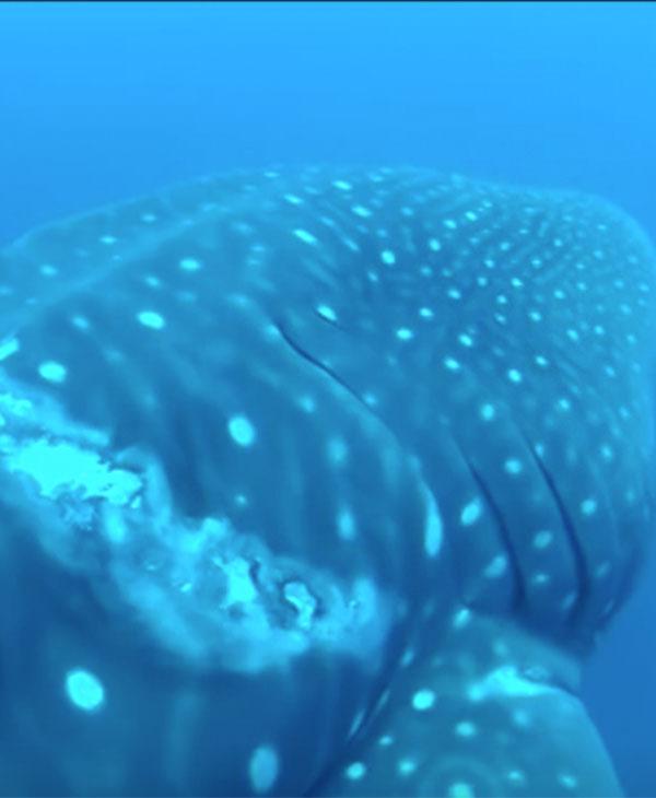 animal-ocean-water-diver-rescue-swim.jpg