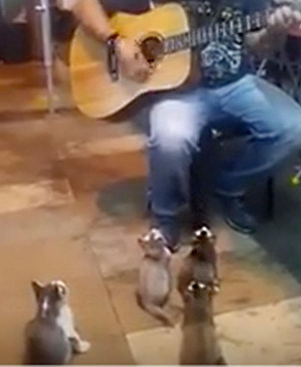 cute-kitty-music.jpg