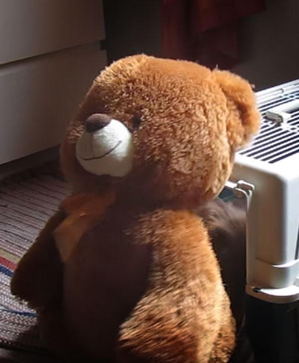 cute-teddy-bear-outside-kennel.jpg
