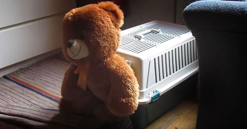 cute-teddy-bear-THUMB.jpg