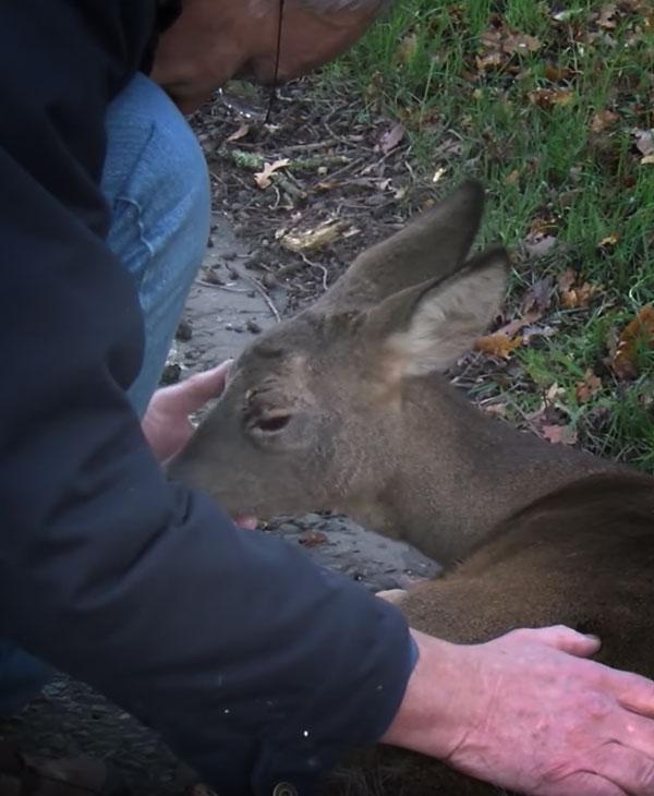 cute-deer-on-road-with-rescuer.jpg