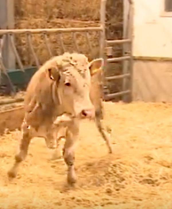cute-bull.jpg