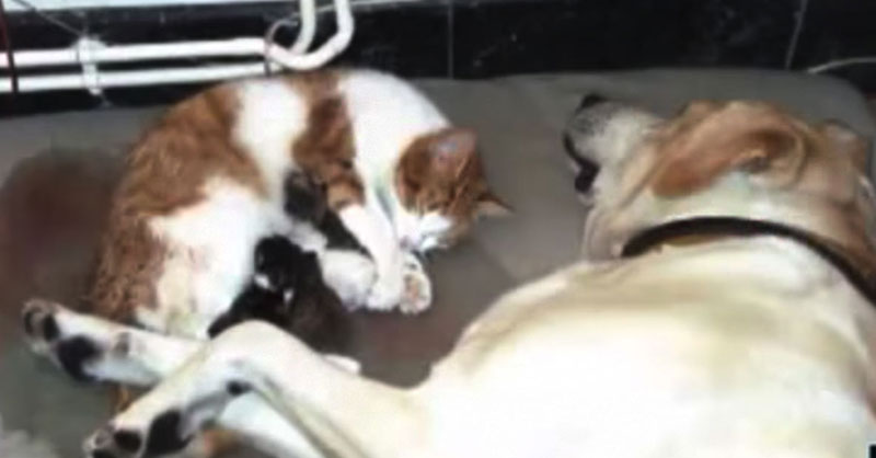 cute-cat-gives-birth-with-dog-help-THUMB.jpg