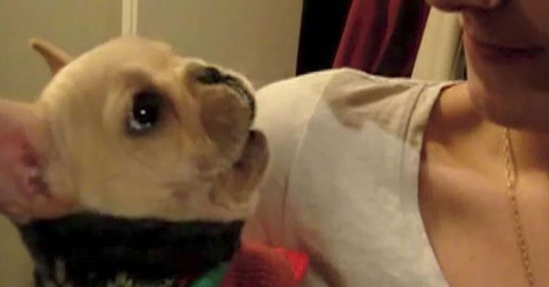 cute-french-bulldog-talks-THUMB.jpg
