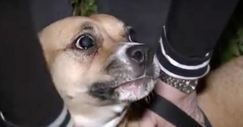 cute-dog-hero-thumb.jpg