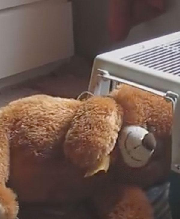 cute-bear-disappear.jpg