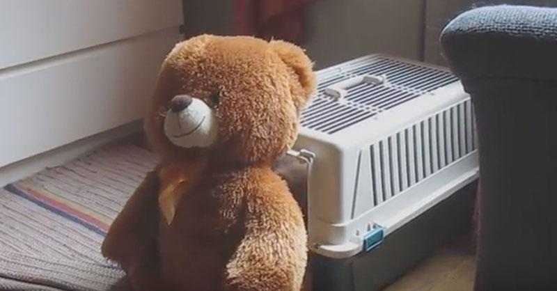 cute-bear-thumb.jpg