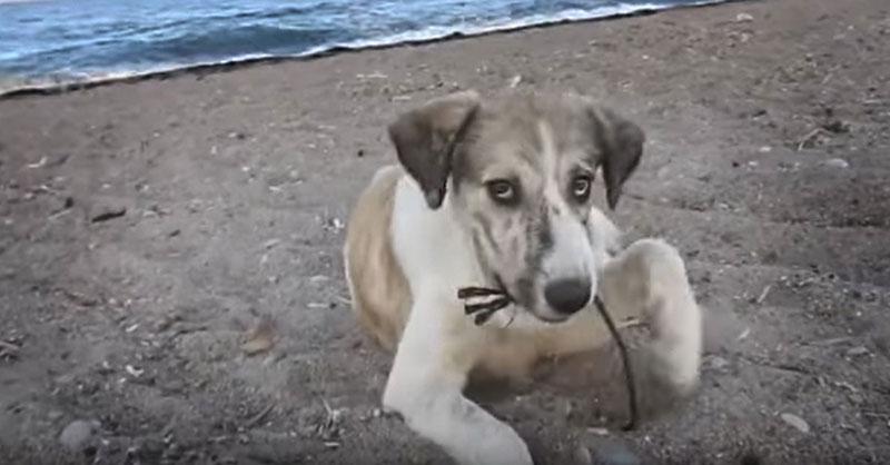 cute-homeless-beach-dog-THUMB.jpg
