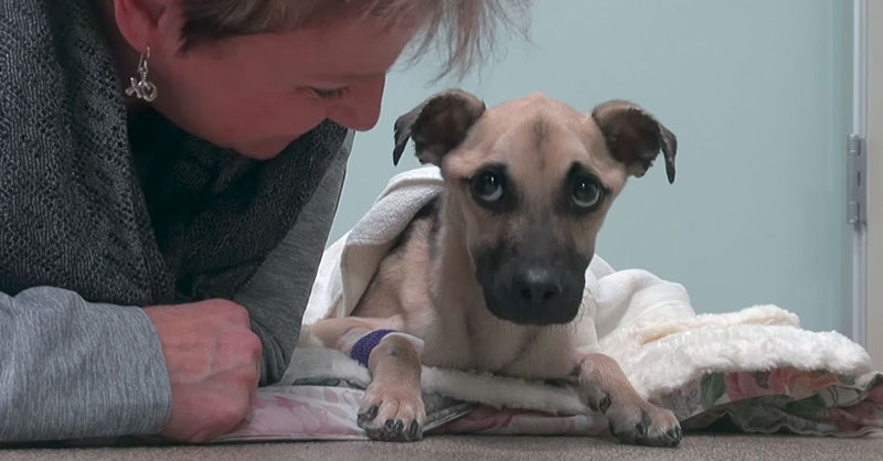 cute-hurt-dog-with-rescuer-THUMB.jpg