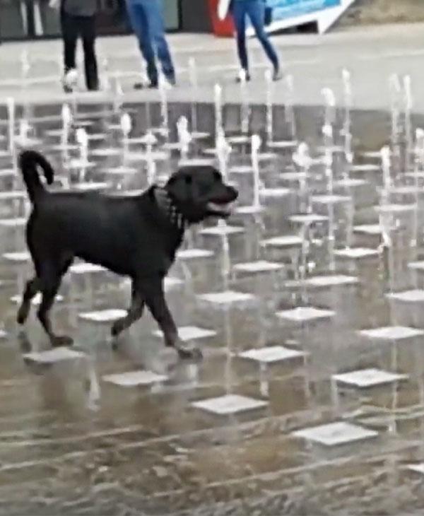 animals-pets-dogs-funny-walking.jpg