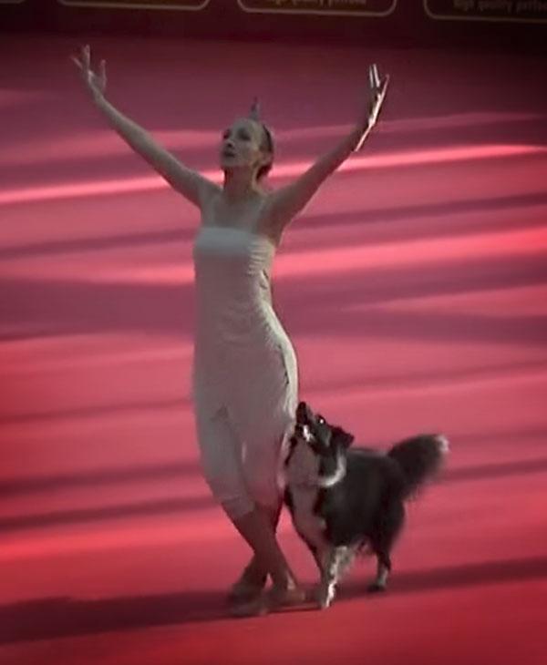 cute-dog-dancer-finish.jpg