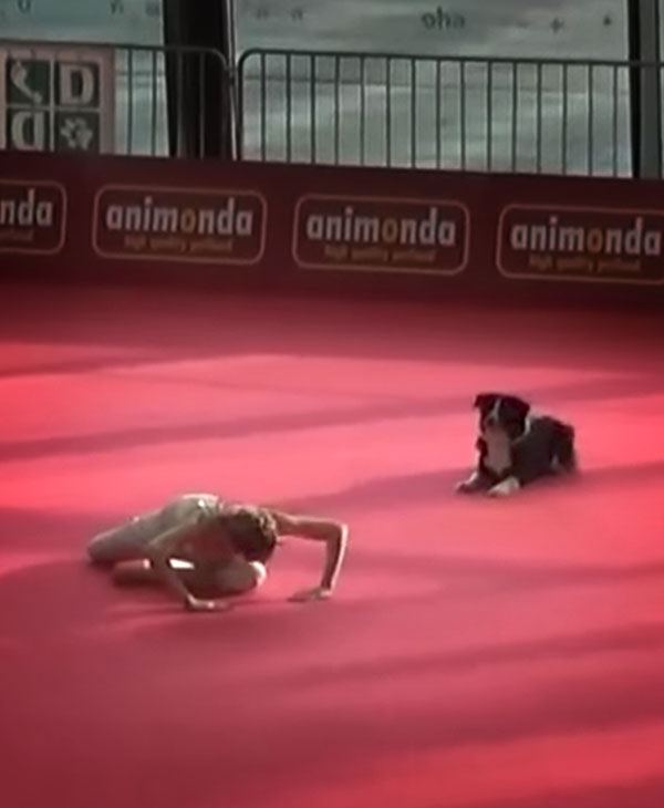 cute-dog-dancer-on-floor.jpg