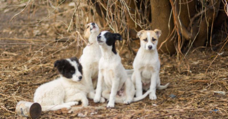 cute-dogs-thumb.jpg