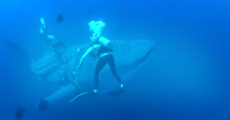 cute-whale-shark-save-THUMB.jpg