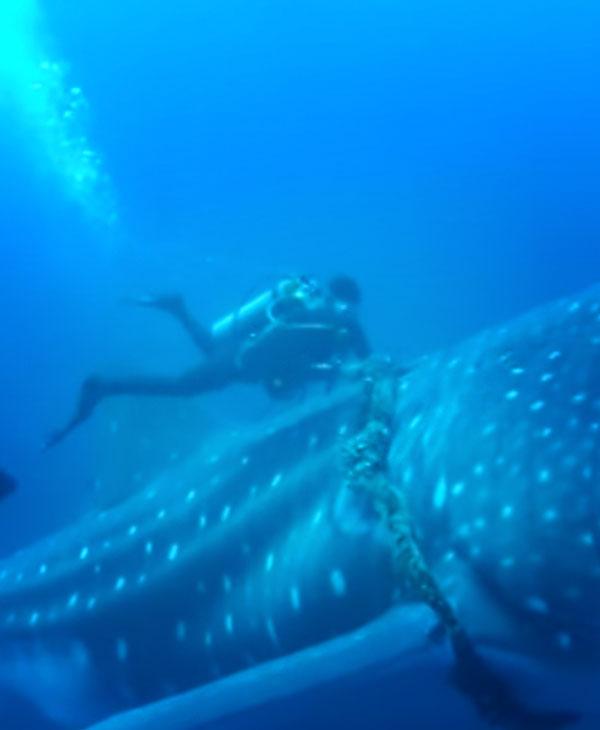 cute-whale-with-diver.jpg