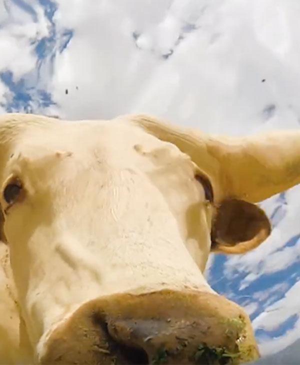 animals-wild-farm-cute-water-bull.jpg