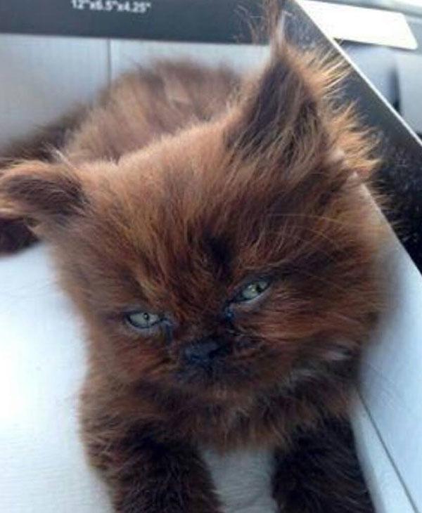 cute-brownie.jpg