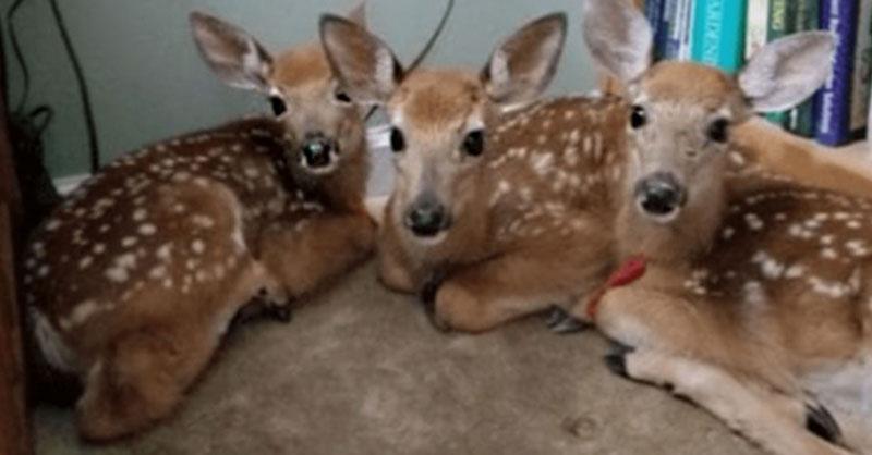 cute-deer-thumb.jpg