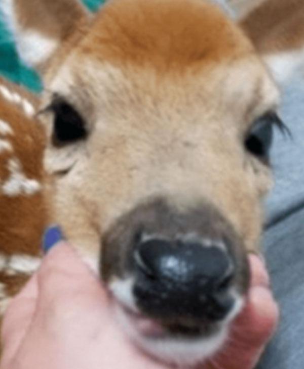 cute-deer.jpg