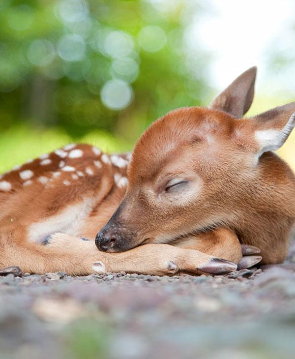 cute-dear.jpg