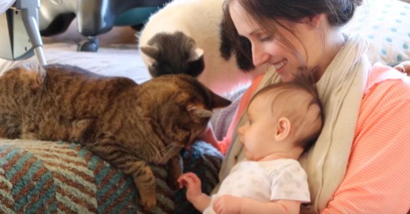 cute-kids-babies-cats-animals-THUMB.jpg
