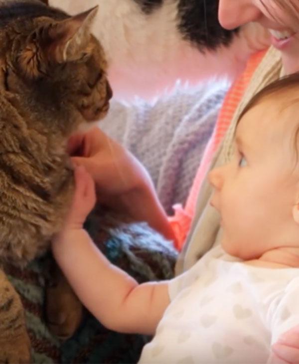 cute-kids-babies-cats-animals-touch.jpg