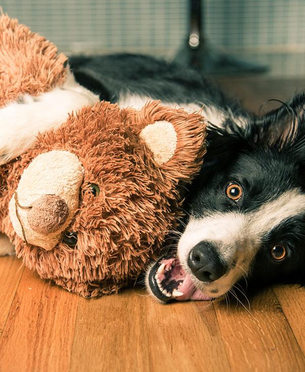 cute_dog_toy.jpg
