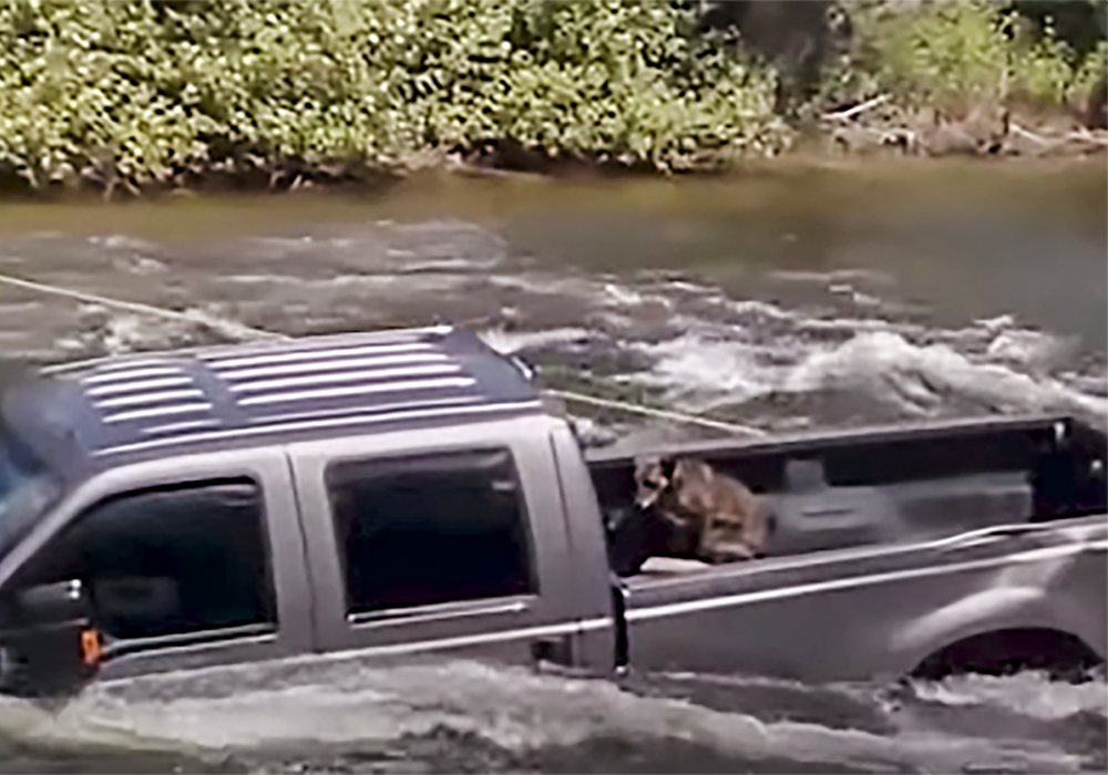 Bed Of A Truck >> Dog Trapped In The Bed Of A Truck Surrounded By Roaring Rapids
