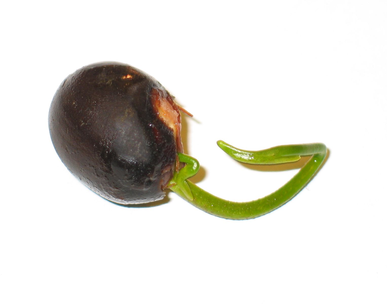 seed-germinating.jpg