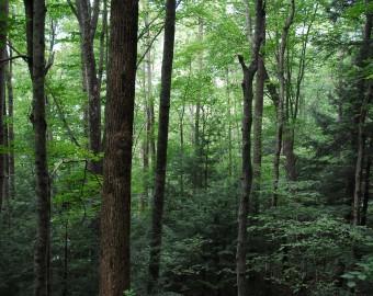 Interior-forest.jpg