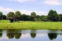 Florida-Land.jpg