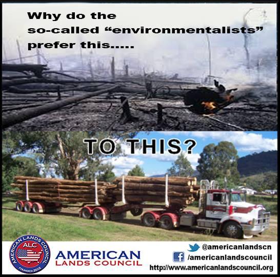 Environmentalism-Fire.jpg